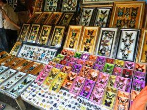Oleh-oleh khas Makassar - souvenir kupu-kupu bantimurung